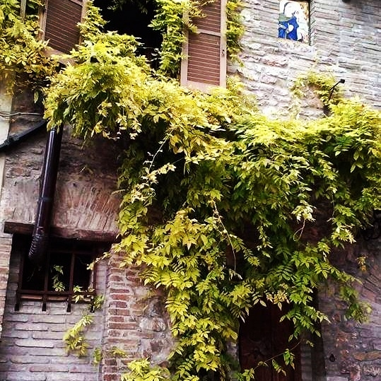 Tree and a house