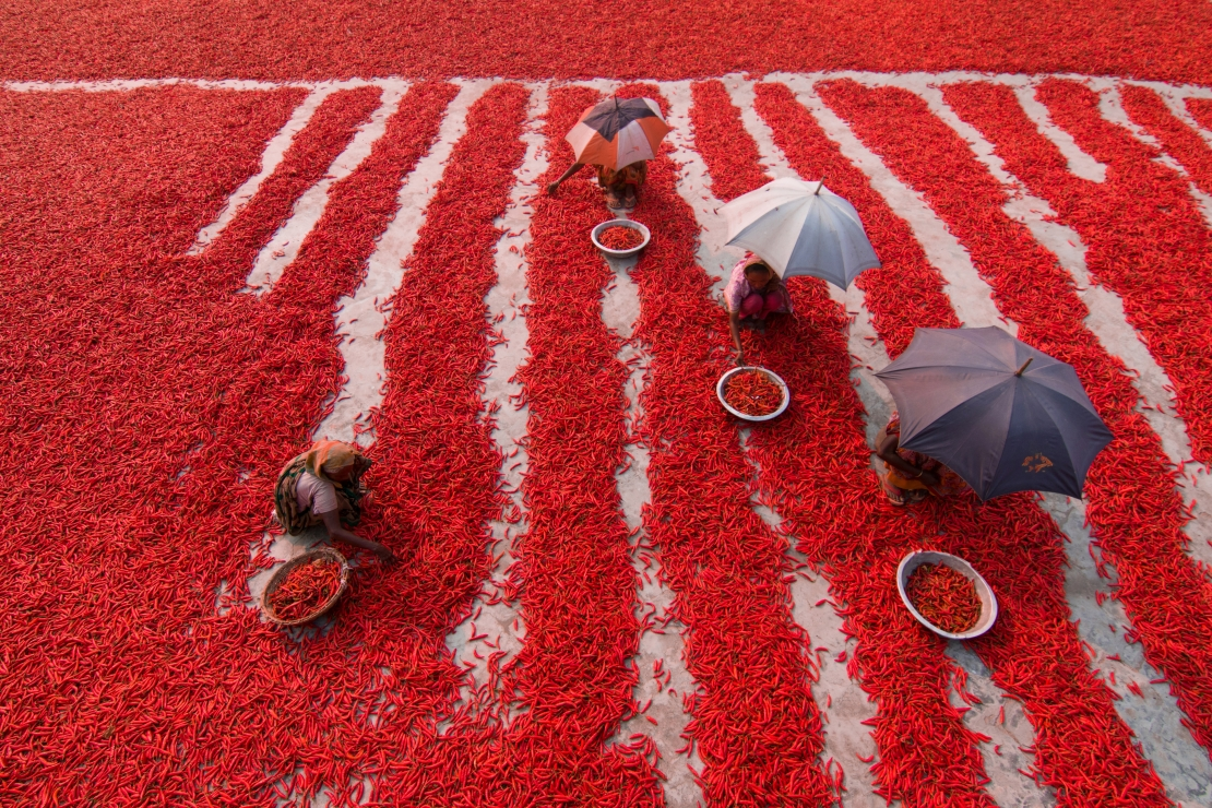 Red Chilies Pickers