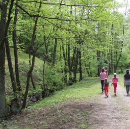 Walking thruogh the forest