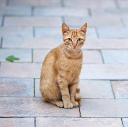 Beautiful cat looking curiously