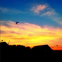 Bird And Sunset