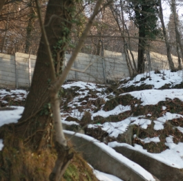Woods cover in Snow