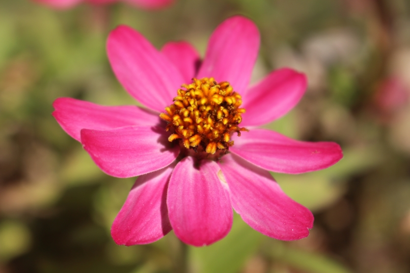 flower shot in the fall of October 2019