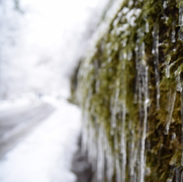Beautiful icicles on moss
