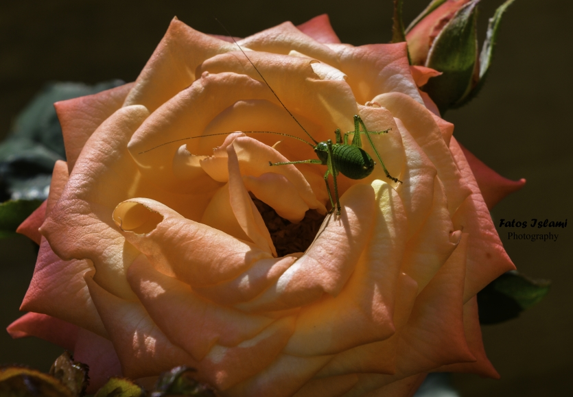 The flower and insect