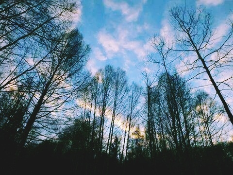 Sky Above the Forest