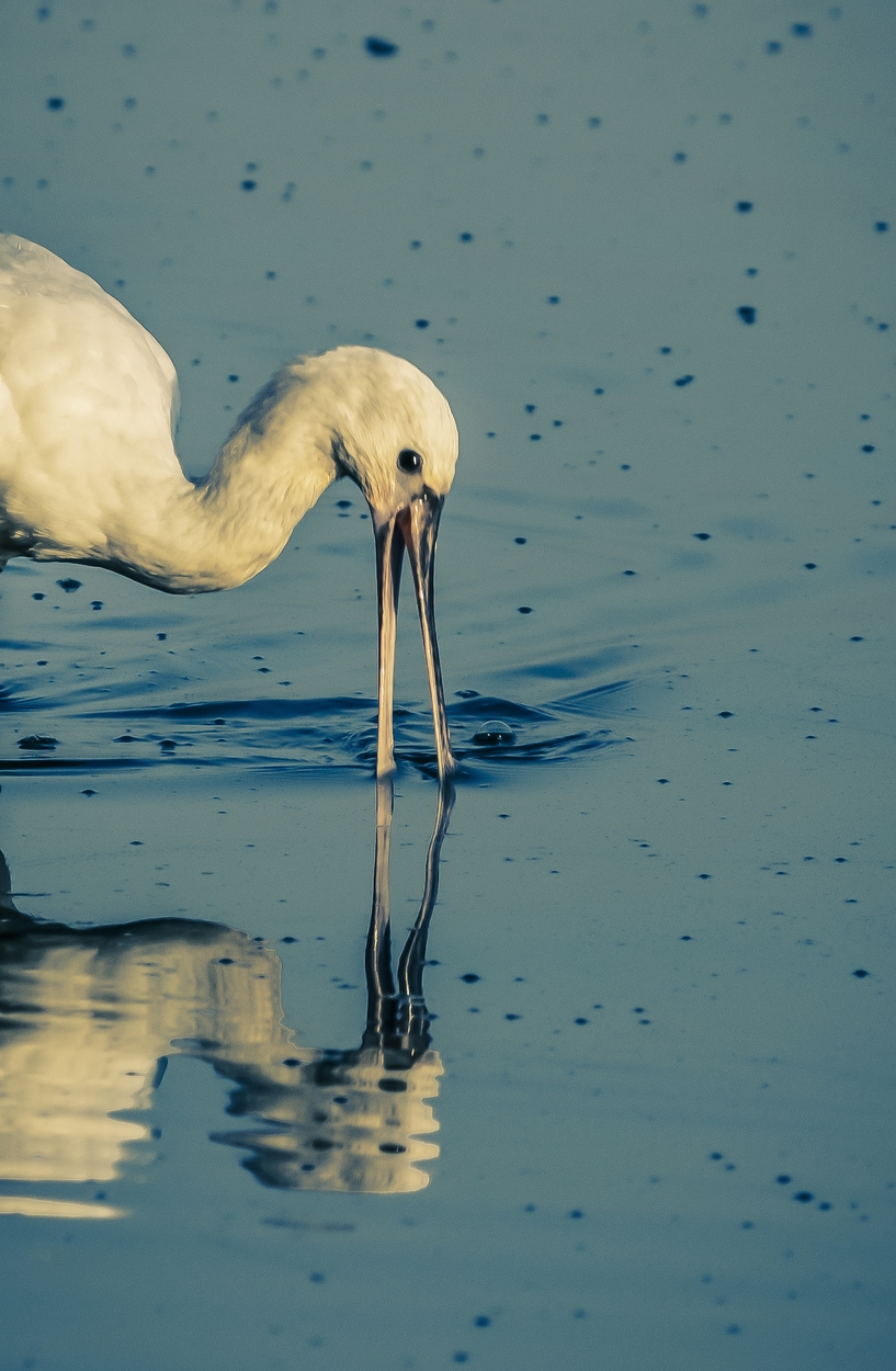 Reflections of Bird in Water