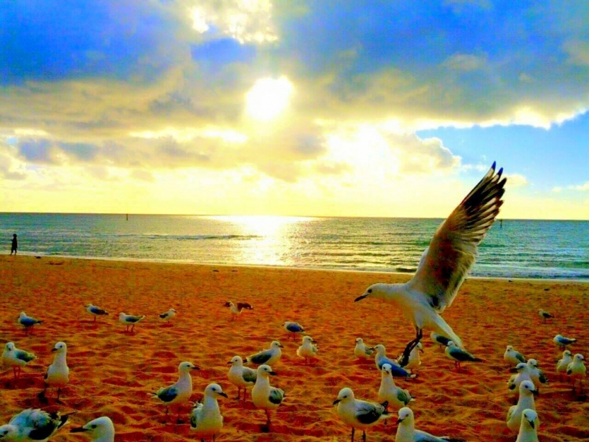 seagulls in sunset on a friday night