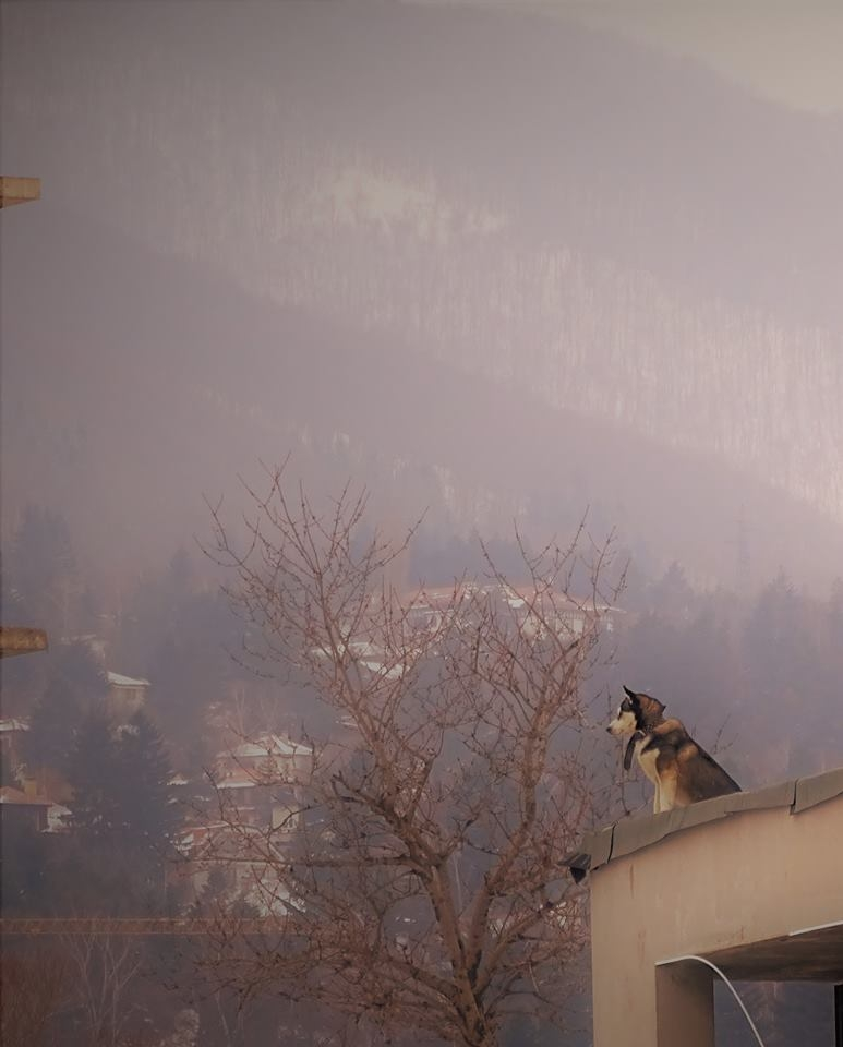 The dog on the roof