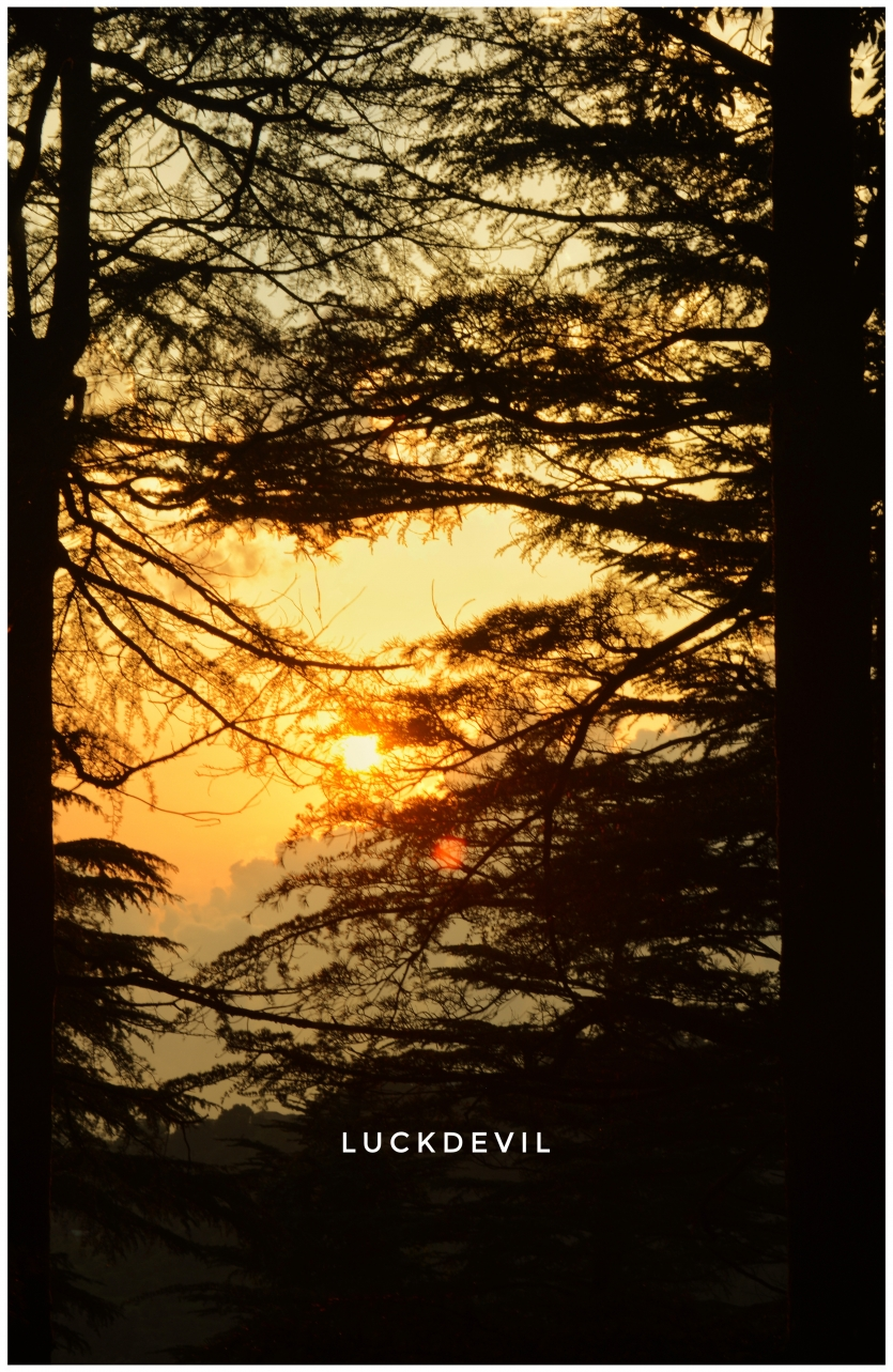 Sunset in woods