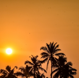 Sunset in the shores of Kerala with the coconut trees