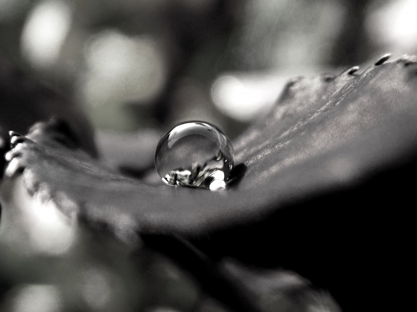 Nature's tears