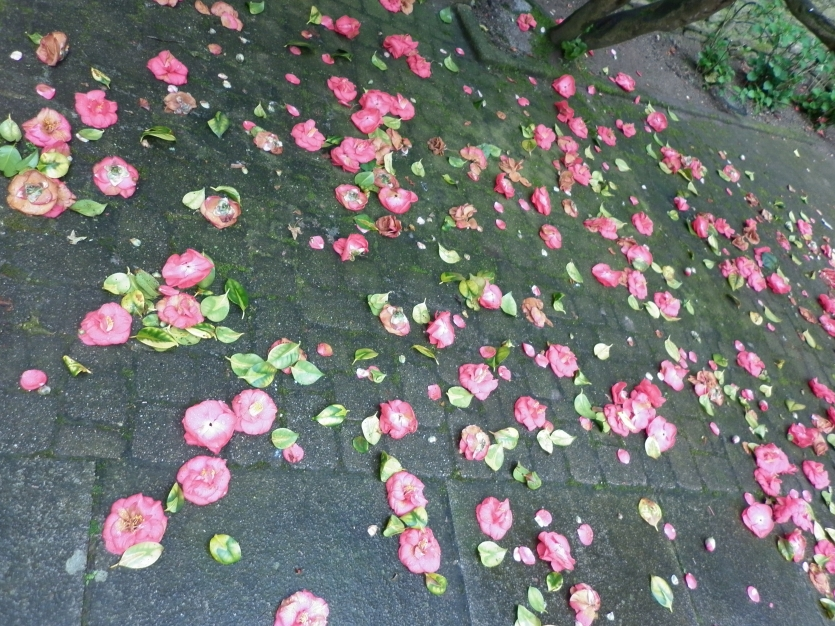 A rose carpet