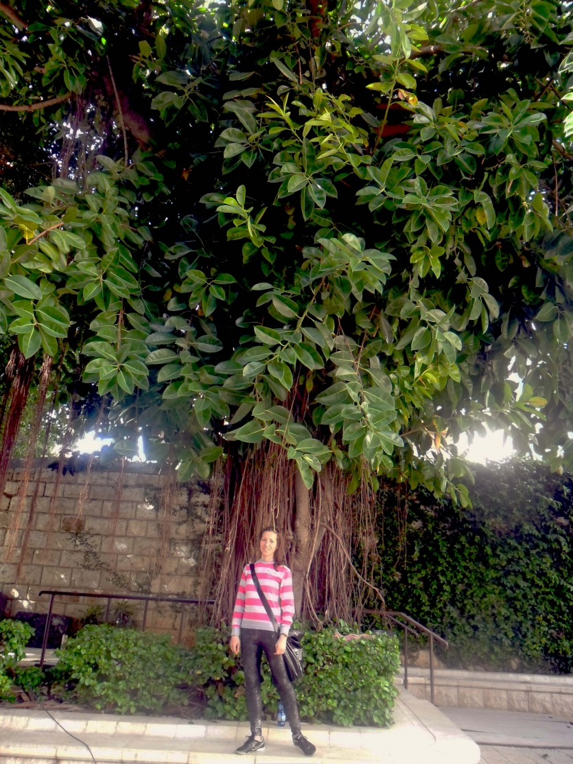 St. Maria Catholic Church Tree and me