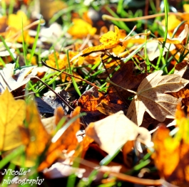 A fallen leaf is nothing more than a summer's wave goodbye.