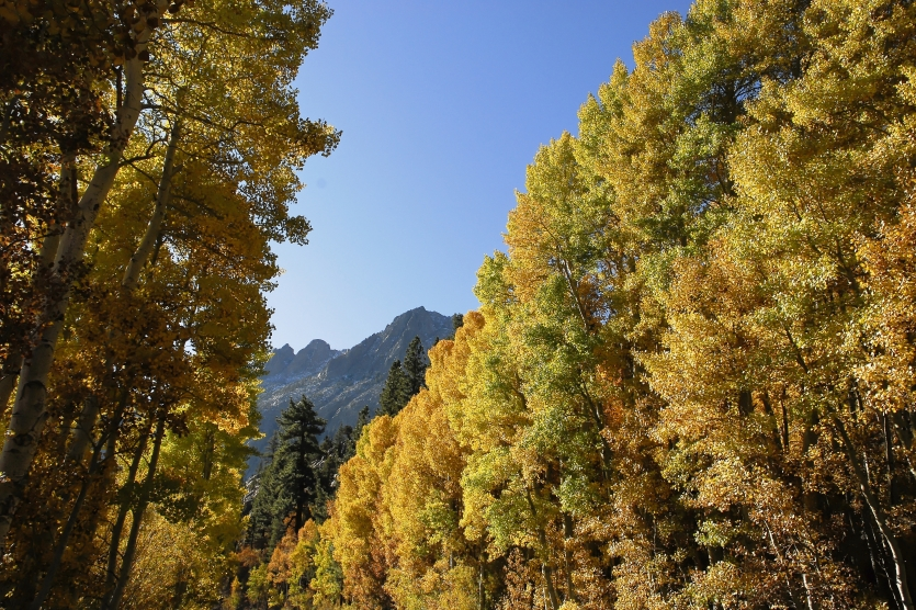 Fall at June Lake