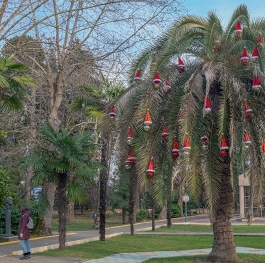 Palm tree decorated with toys in the park of the city of Sochi