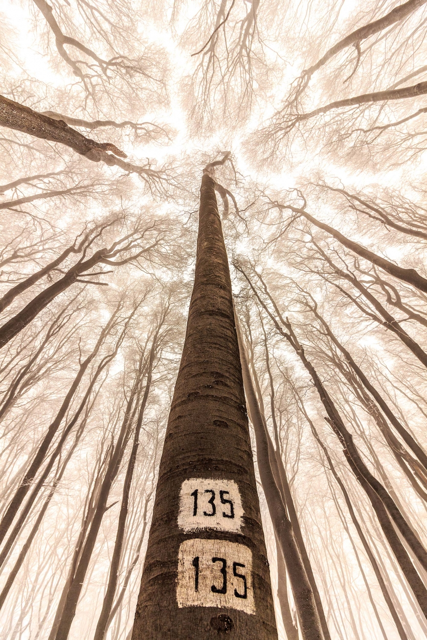 Numbered trees in a forest