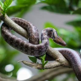 Snake on the tree
