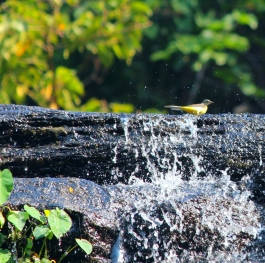 bird in a waterfall.