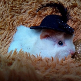 Funny Pets with Hats