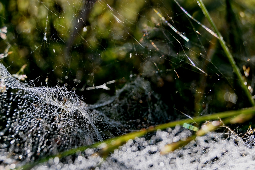 spider's web and morning dew