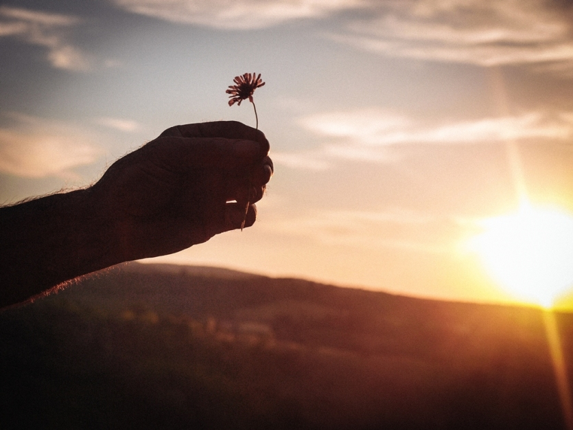 Man's hand offering a flower during the sunset