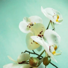 The branch of orchid