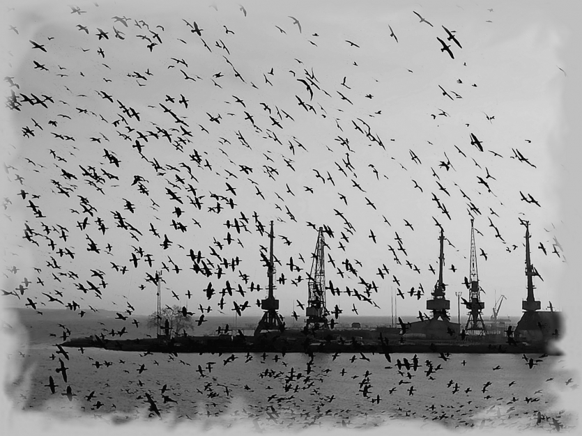 Time of migratory birds.