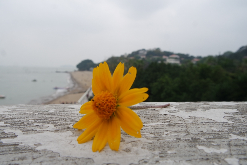 Flower By The Shore