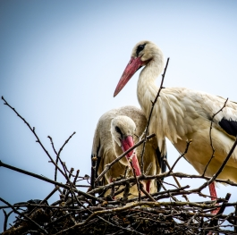 Spring and the storks