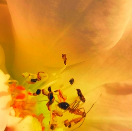 The tiny ant on the flower.
