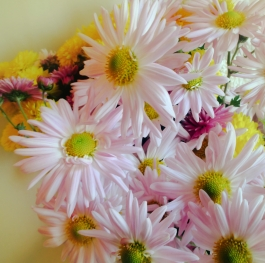 Bouquet of daisies