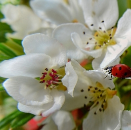The beauty of the spring time, macro photo