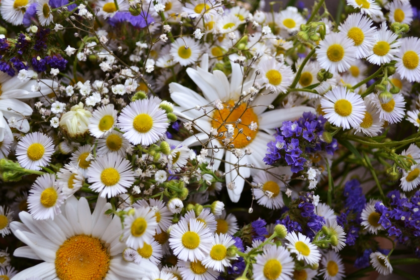 Bellis, Gypsophila and a bit of love