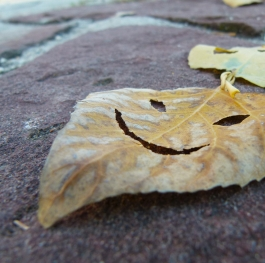 Funny leaves