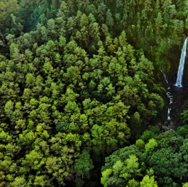 Green forest for our better life