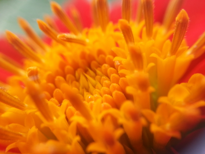 The Macro of a Flower