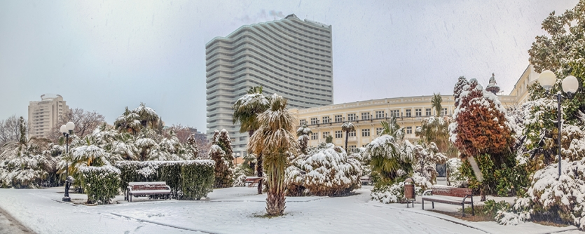 Snow on palm trees in the city of Sochi