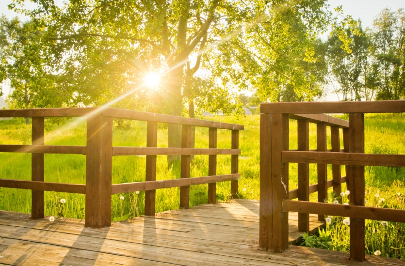 sun shines on the wooden bridge and trees