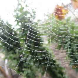 Spider's web after rain
