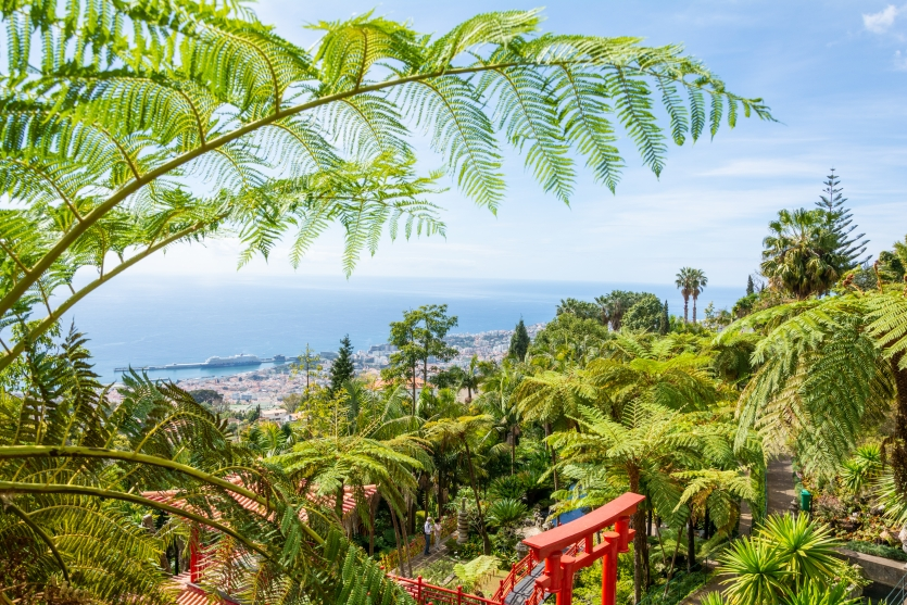 Tropical Forest on top of Funchal city Madeira.
