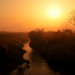 Dawn by the brook