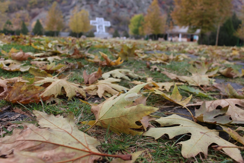 Autumn leaves Bulgaria near Rupite, autumn time September-October