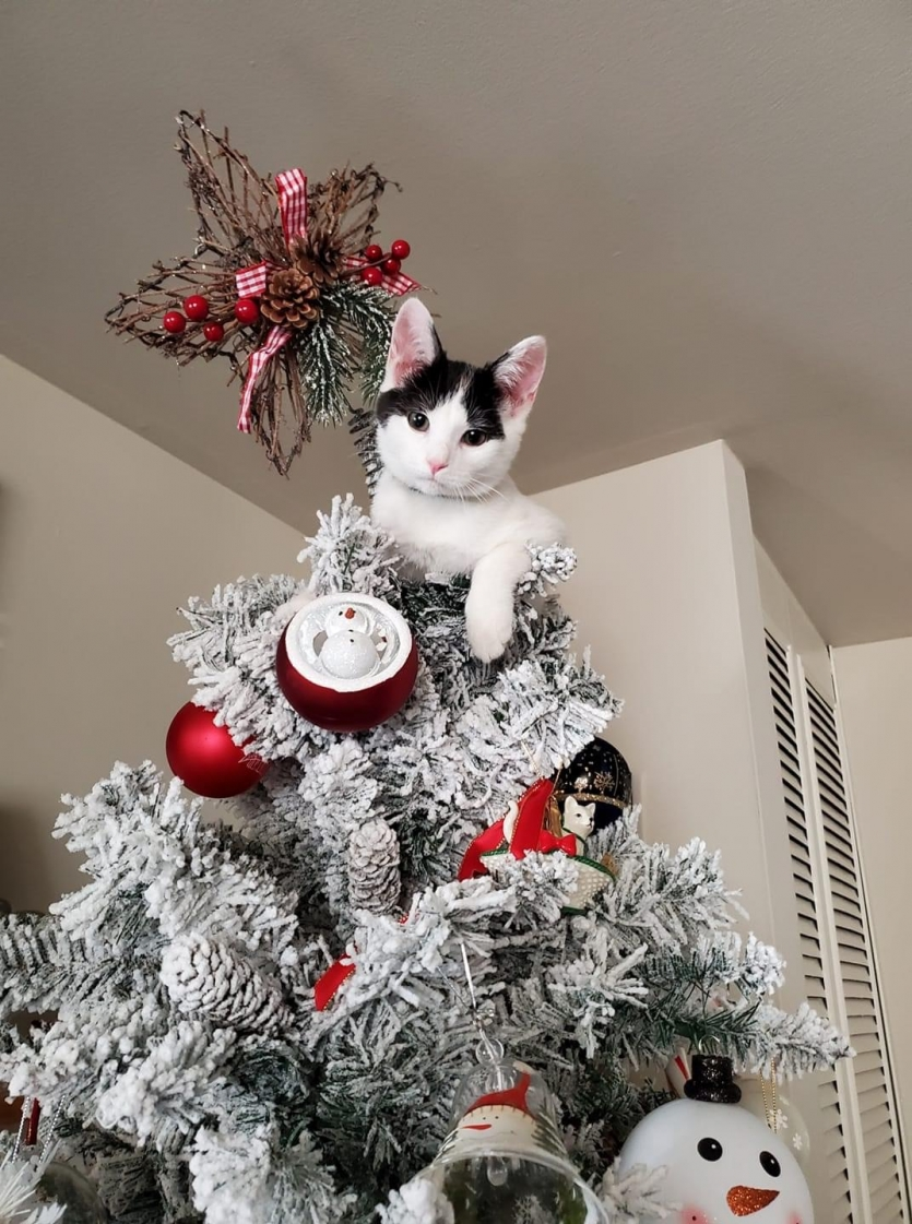 CiCi and the tree