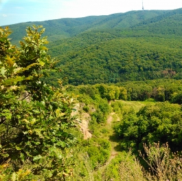Viewpoint from Eagle's battlefield