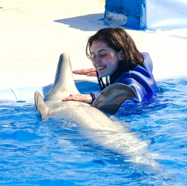 Swiming with dolphin