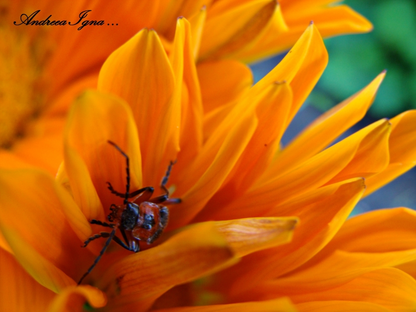 bug in orange  royal sheets