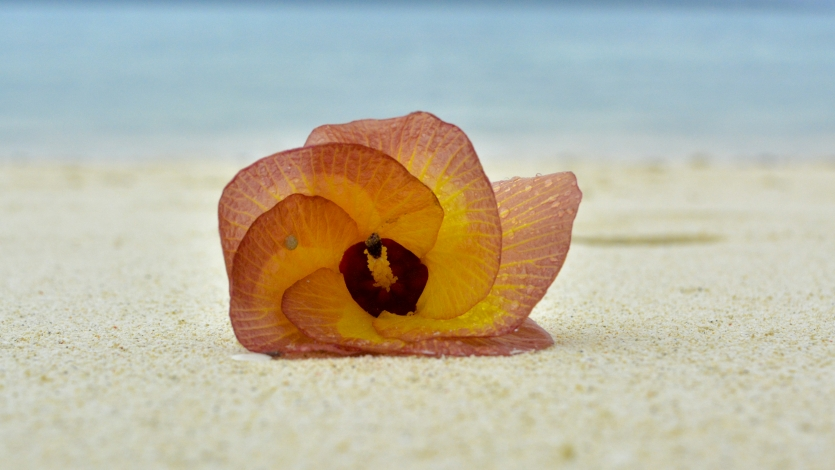 A flower in the Andaman Island