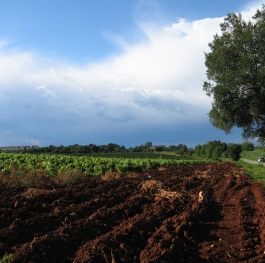 The land of Red Wine Teran